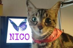 Nico per #tiroideinprimopiano